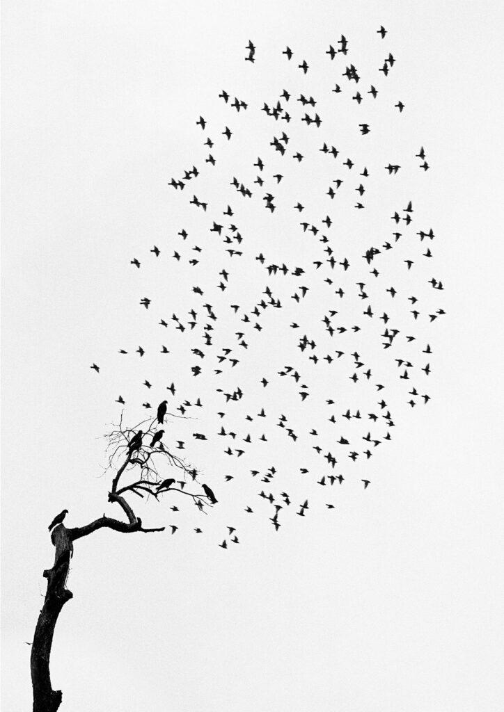 Foto-haiku del fotógrafo finlandés Pentti Sammallaht